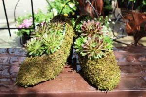 moss_shoes_sm