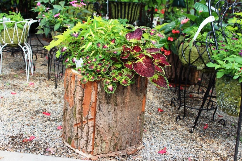 wood_stump_planter_sm